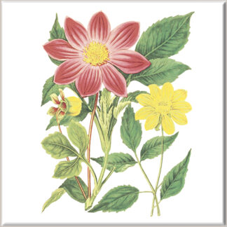 Red and Yellow Dahlia Flowers Ceramic Wall Tile