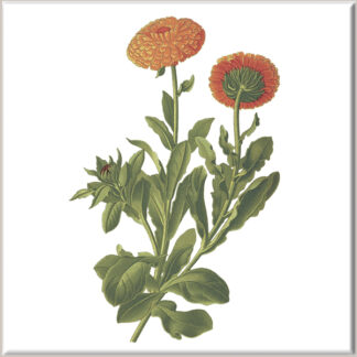 Russet Chrysanthemum Flowers Ceramic Wall Tile
