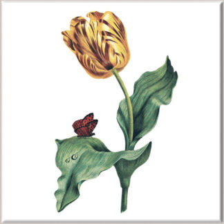 Variegated Golden Tulip Flower Ceramic Wall Tile