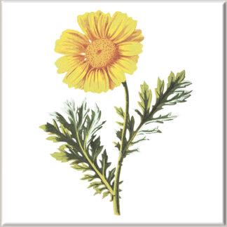 Yellow Chrysanthemum Flower Ceramic Wall Tile